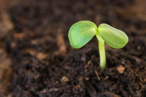 seedling-fertile-ground-e1284564039611